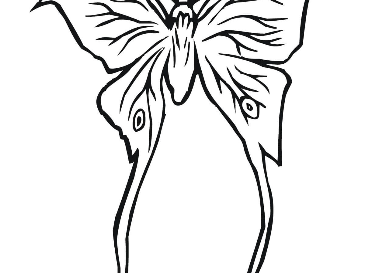 1200x900 Imposing Moth Coloring Pages For Kids Luna Killer Butterfly