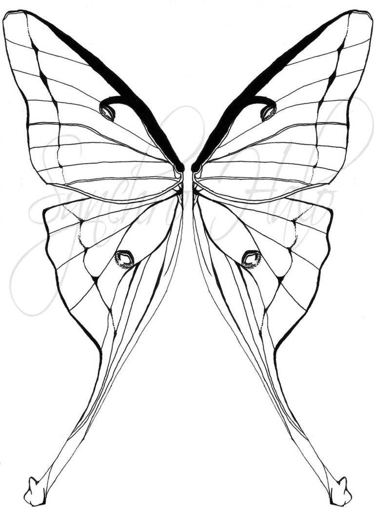 767x1041 Moth Coloring Page