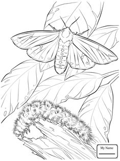 235x314 Moth Coloring Page Free Moth Online Coloring