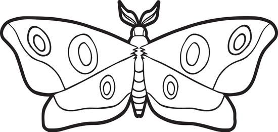 550x261 Moth Coloring Page Moth, Free Printable And Teaching Kids