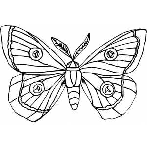 300x300 Moth Coloring Page