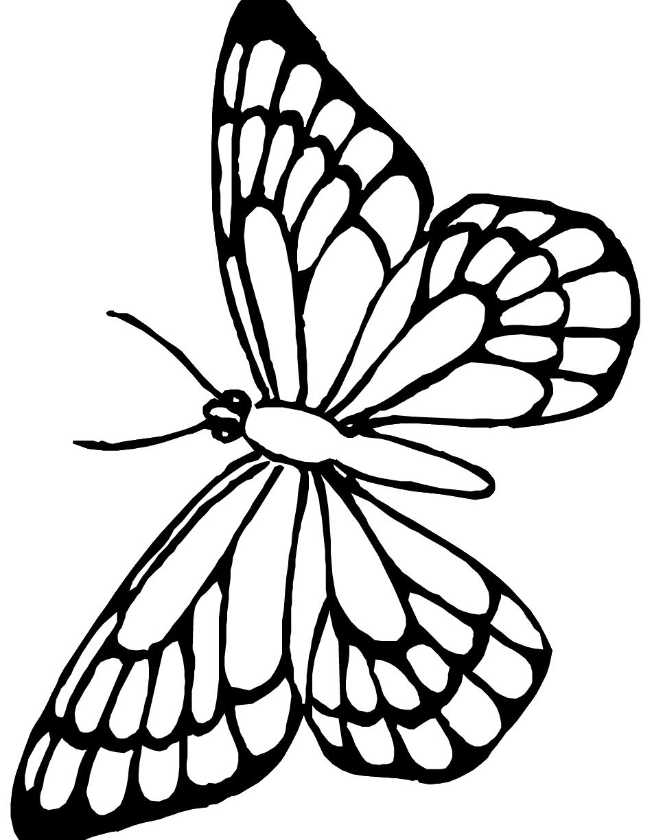 950x1224 Mothman Coloring Pages Luna Moth Butterfly And Free Cicada Nymph