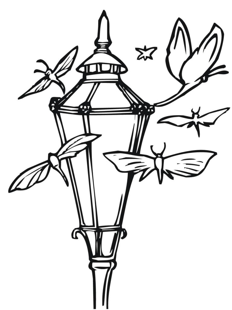 768x1024 Moths And Lantern Coloring Book