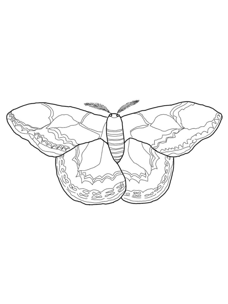 768x1024 Rotschilds Silk Moth Coloring Book