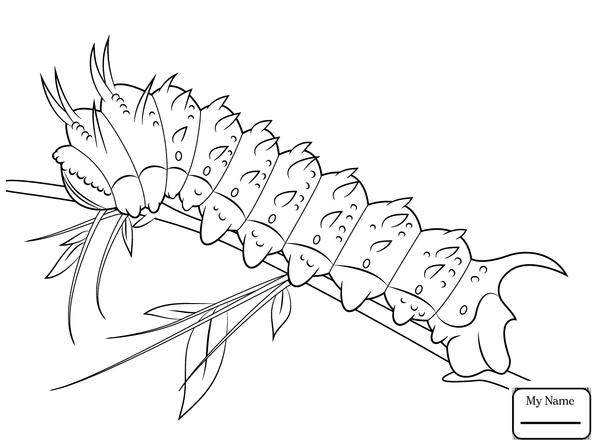 1223x912 Free Printable Cecropia Tree Coloring Pages Gallery Coloring