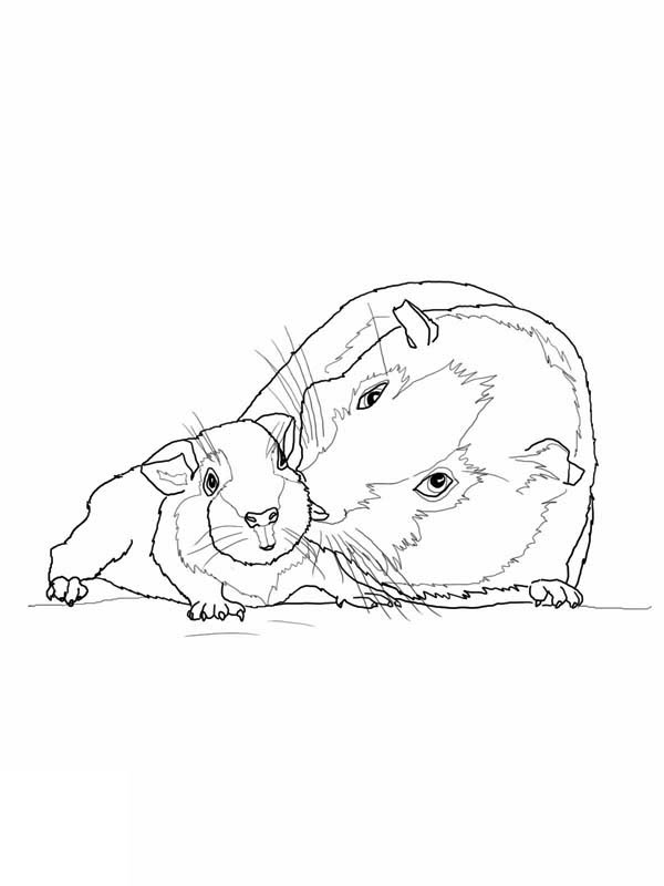 600x800 Guinea Pig Mother And Baby In Guinea Pig Coloring Page Color Luna