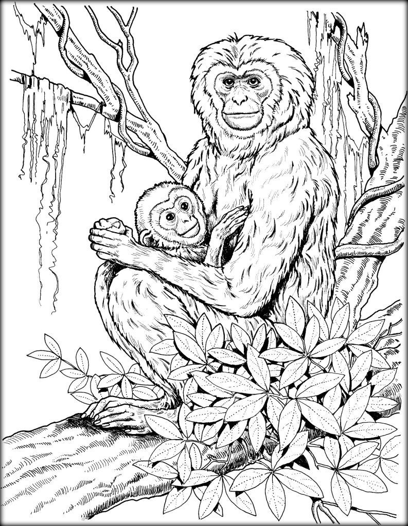 793x1024 Mother Earth Coloring Pages Best Of Baby Primates