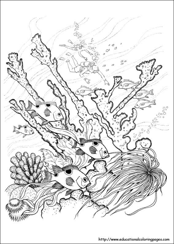 567x794 Free Difficult Coloring Pages Educationalcoloringpag Nature