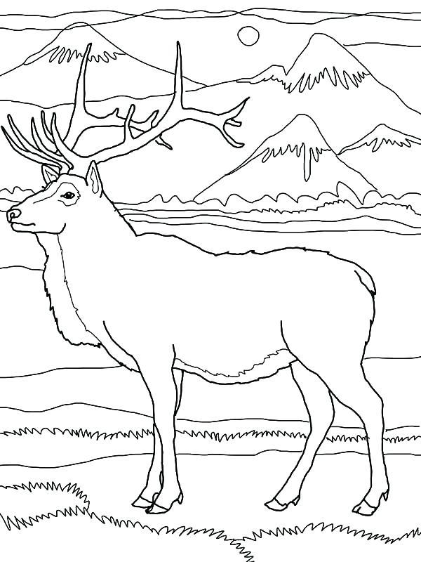600x800 Elk Coloring Pages Elk