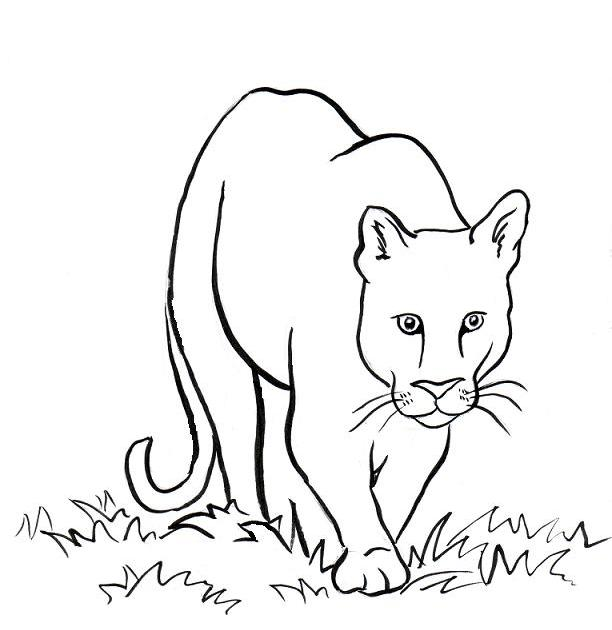 612x630 Mountain Lion Coloring Page