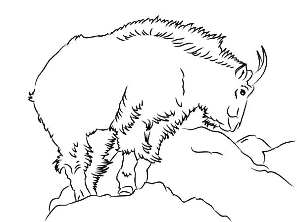 600x448 Goat Coloring Pages Goat Coloring Sheet Mountain Coloring Page