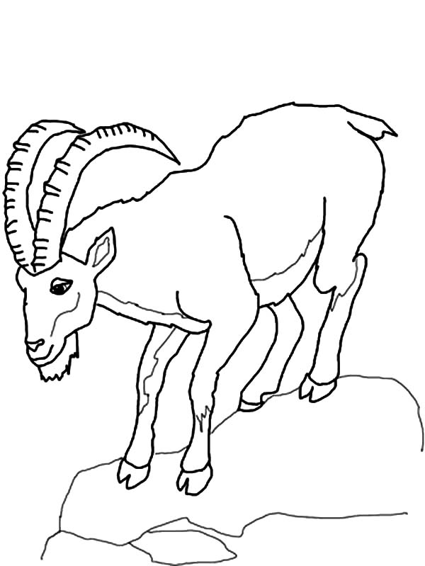 600x799 Mountain Goat Climb Down Hill Coloring Pages Color Luna