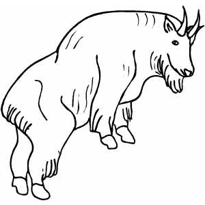 300x300 Mountain Goat Coloring Page