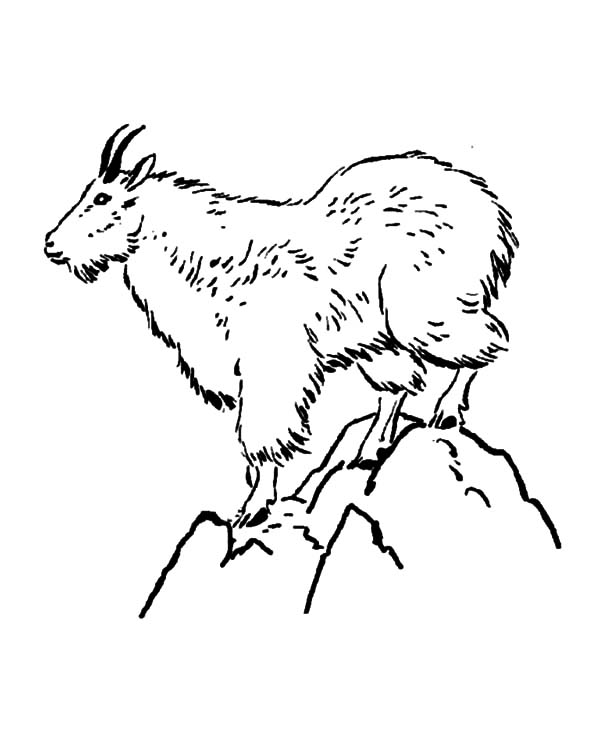 600x734 Mountain Goat Coloring Pages Color Luna