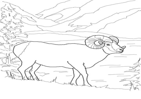 476x333 Mountain Goat Coloring Pages Page Image Clipart Images