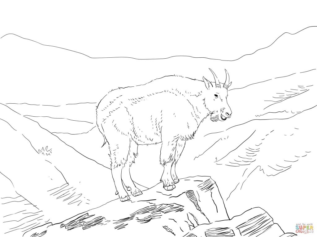 1024x768 Mountain Goat Mount Massive For Coloring Page