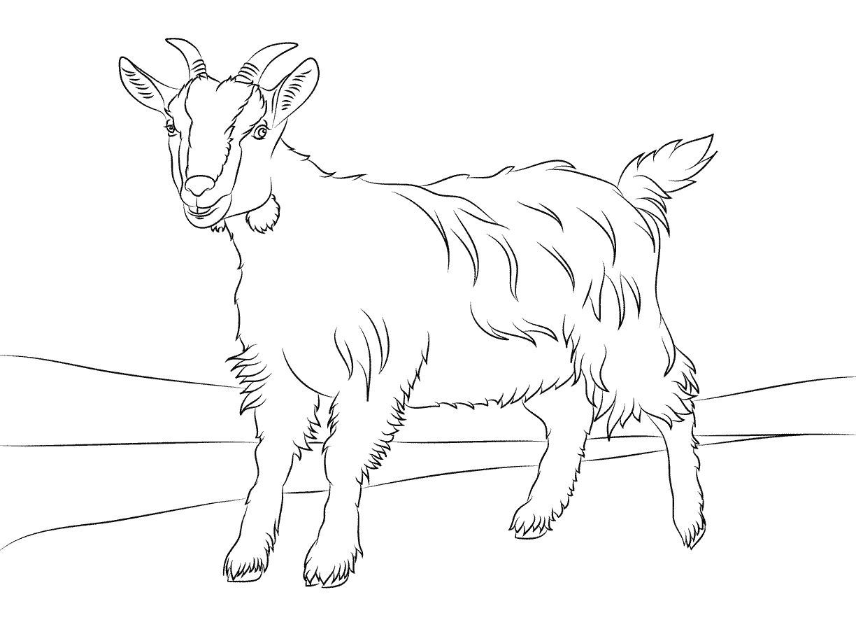 1224x916 Coloring Pages Farm Animals Cute Billy Goat Smiles Free Printables