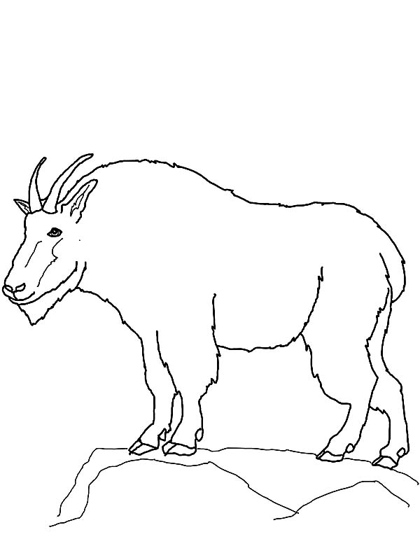 600x800 Mountain Goat Outline Coloring Pages Color Luna