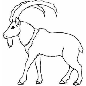 300x300 Walking Mountain Goat Coloring Page