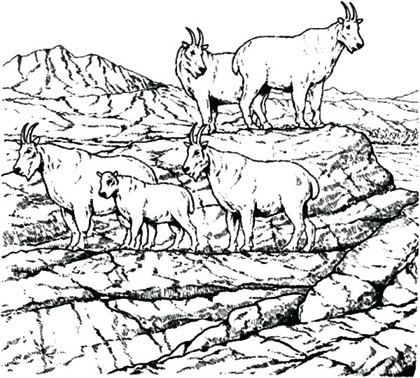 600x540 Coloring Pages For School Mountain Goat School Of Mountain Goat
