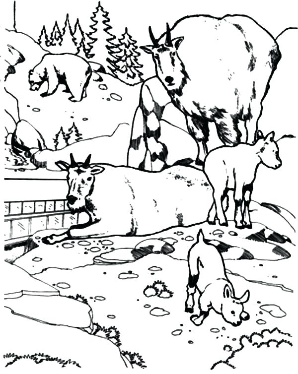 600x754 Coloring Pages Of Mountains National Zoo Mountain Goat Coloring
