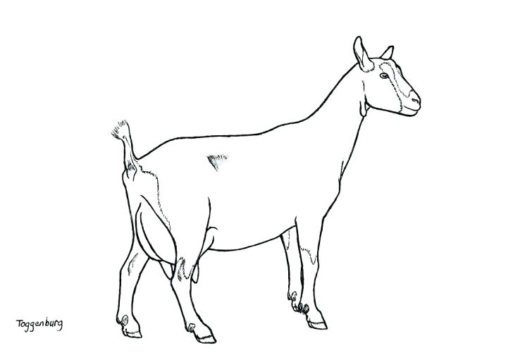 728x514 Goat Coloring Baby Goat Colouring Pages Coloring Wild Mammals