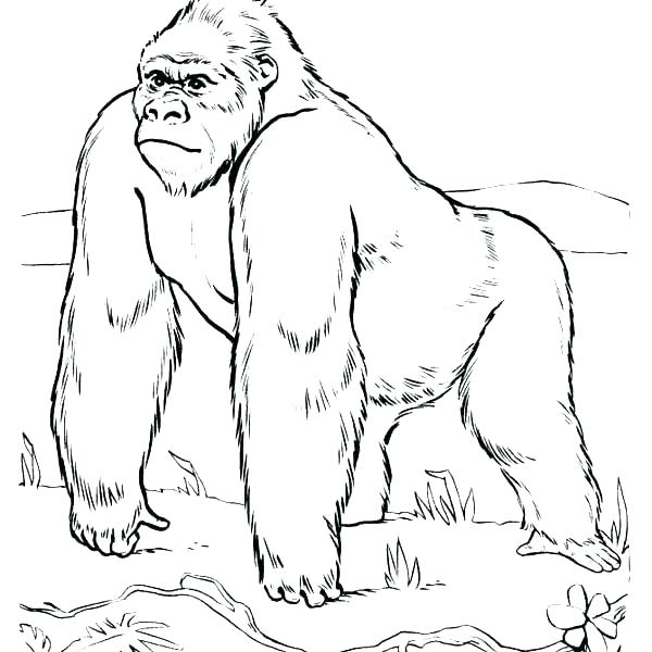600x600 Gorilla Coloring Pages Free Gorilla Coloring Page Printable