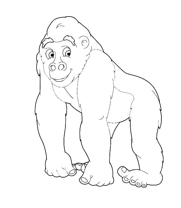 600x690 Gorilla Coloring Pages Winner Gorilla Coloring Pages Download Free