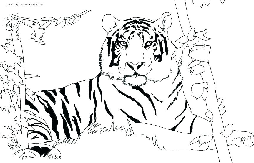 863x553 Gorilla Pictures To Color Gorilla Coloring Pages Mountain Gorilla