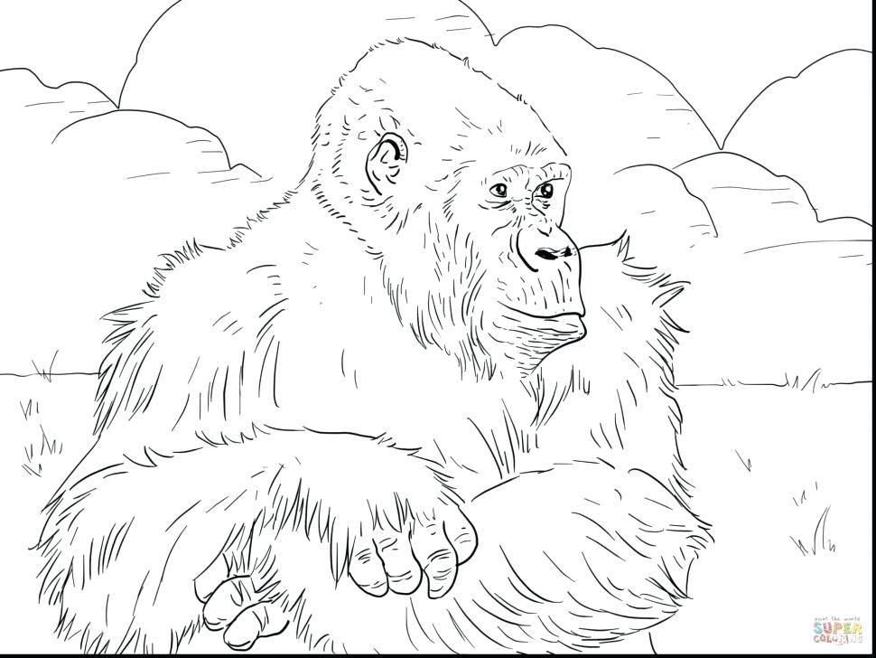 970x728 Mountains Coloring Page Coloring Page Monkey Village