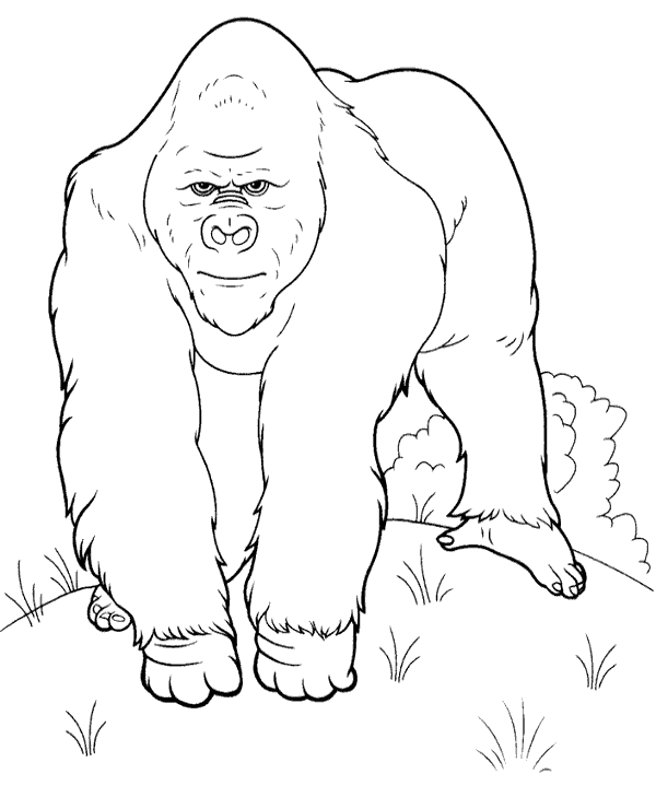 600x740 Realistic Picture To Color Of A Gorilla To Print Or Download For Free