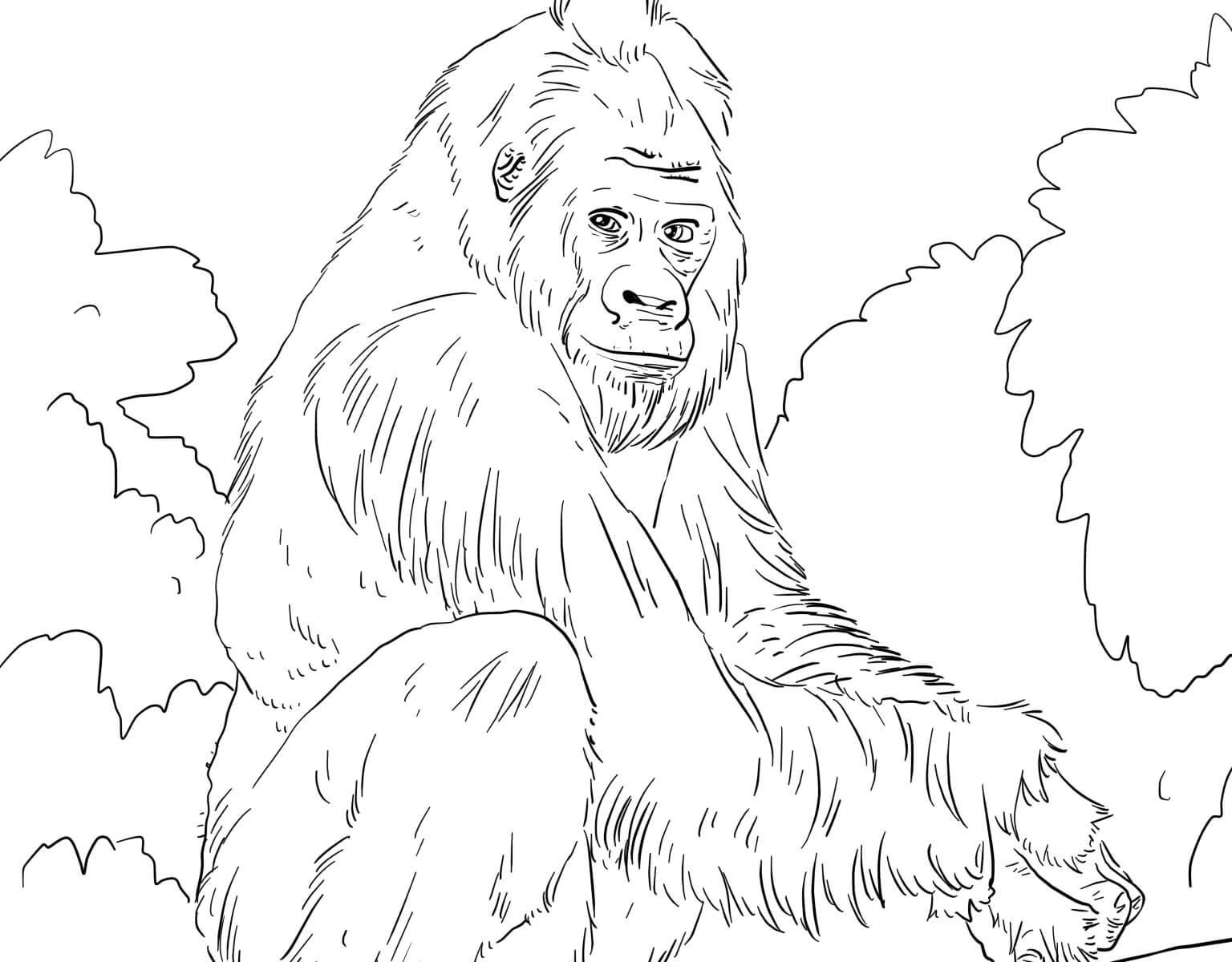 1536x1200 Silverback Gorilla Coloring Page Free Printable Animals Pages Cute
