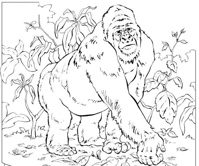 643x536 The One An Only Ivan Coloring Pages Book Themes