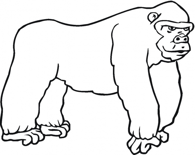 663x525 Coloring Page Gorilla