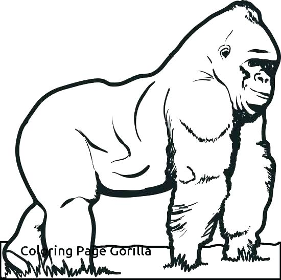 550x547 Gorilla Coloring Page Awesome Gorilla Coloring Page Goodnight