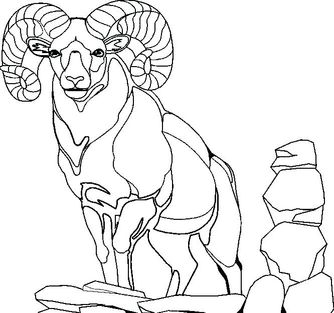Mountain Lion Coloring Pages At Getdrawings Com Free For Personal