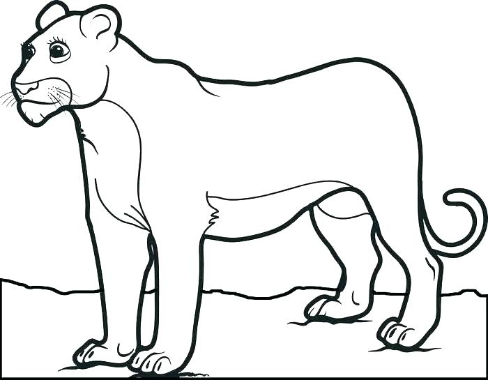 700x545 Mountain Lion Coloring Page Mountain Lion Coloring Page Free