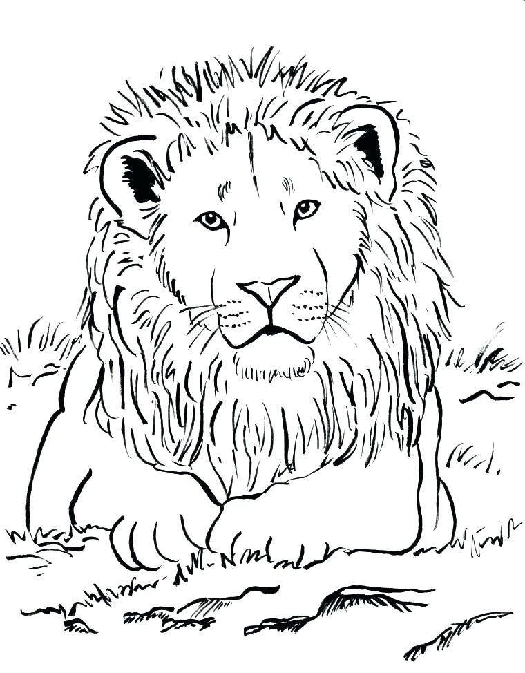 760x974 Mountain Lion Coloring Pages Coloring Pages Of Lions Lion Coloring