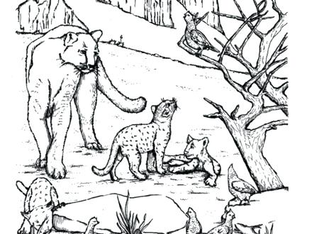 440x330 Mountain Lion Coloring Pages Kids Color The West Mountain Lions