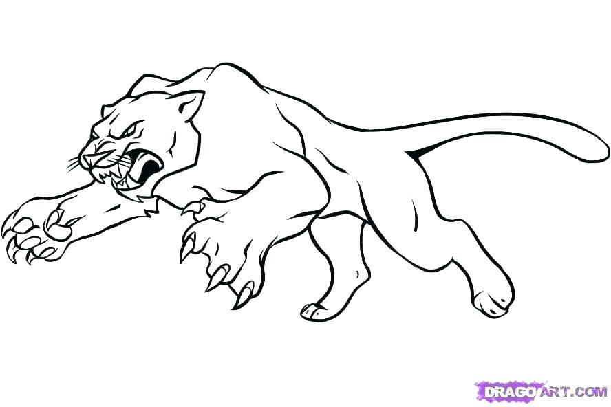 Mountain Lion Coloring Pages At Getdrawings Free Download