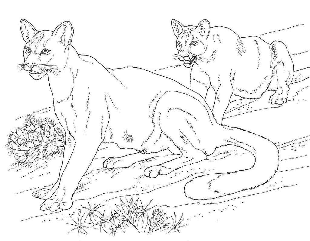 1024x795 Puma And Cougar Coloring Pages, Printable Puma And Cougar Coloring
