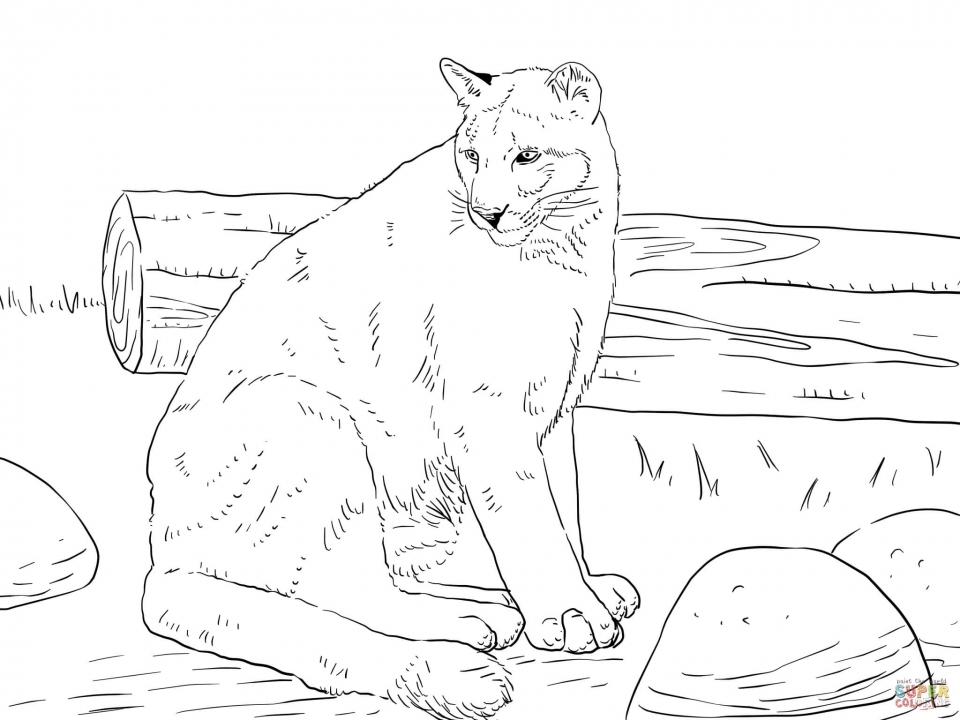 960x720 Get This Mountain Lion Coloring Pages Printable !