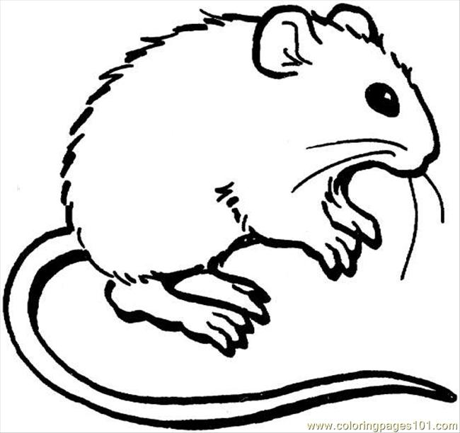 650x612 Mouse Coloring Page Coloring Page