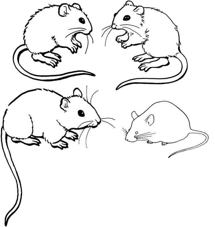 696x734 Mouse Coloring Page Free Printable Mouse Coloring Pages For Kids