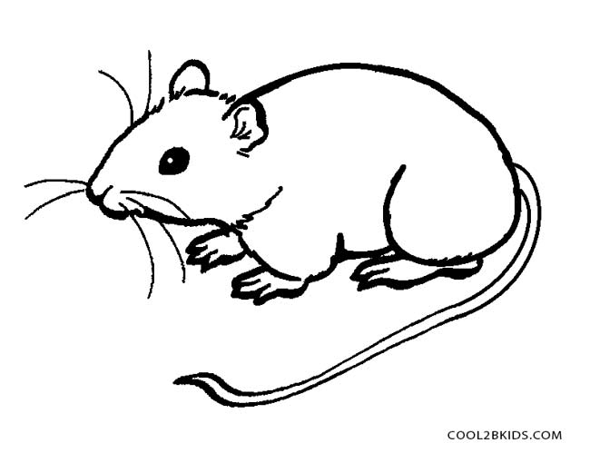 650x499 Mouse Coloring Pages Perfect Mouse Coloring Pages