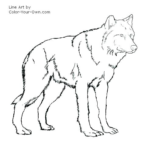 500x500 Coloring Page Wolf