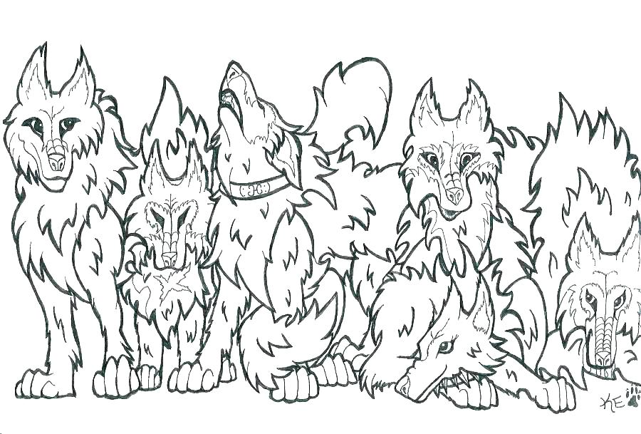 900x609 Coloring Page Wolf Wolf Color Page Wolf Coloring Pages Two Wolves