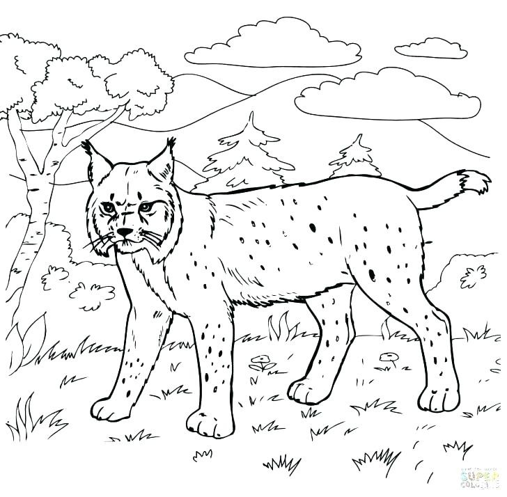 Mt Rushmore Coloring Page