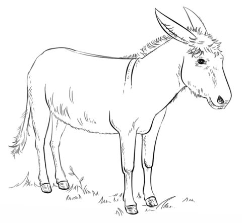 480x442 Donkey Coloring Page Sunday School Ideas Donkey