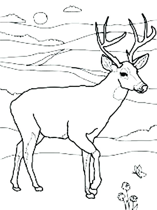 600x801 Baby Deer Coloring Baby Deer Coloring Pages Baby Deer Coloring